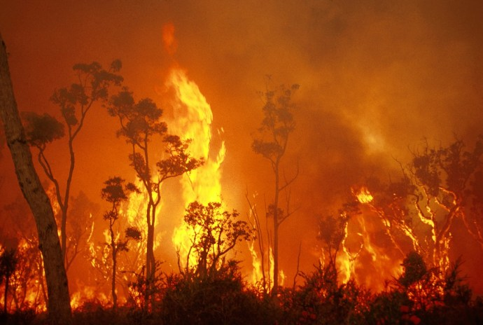 Bushfire basics: what you need to know