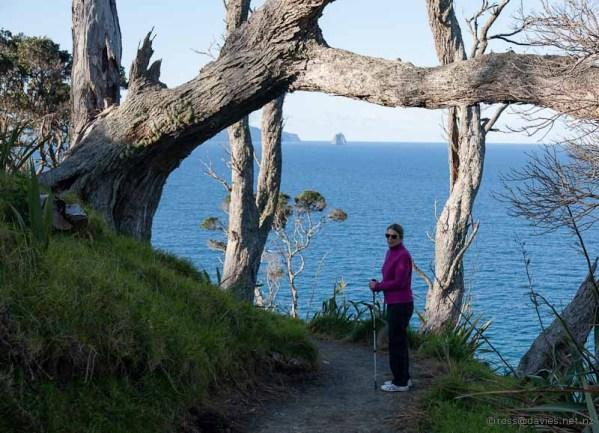 North on the Mangawhai Cliff Top Walkway
