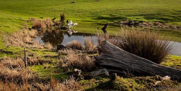 Mt Grand Road Dunedin