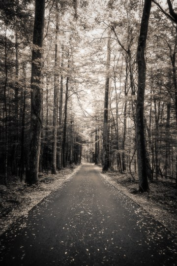 The Road Sometimes Traveled, Roaring Fork Nature Trail