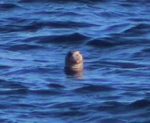 seal-12-2