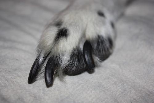D fi 22 pourquoi et comment couper les griffes de son - Comment couper les griffes d un chien ...