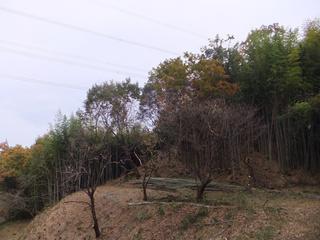 20121122_003.jpg