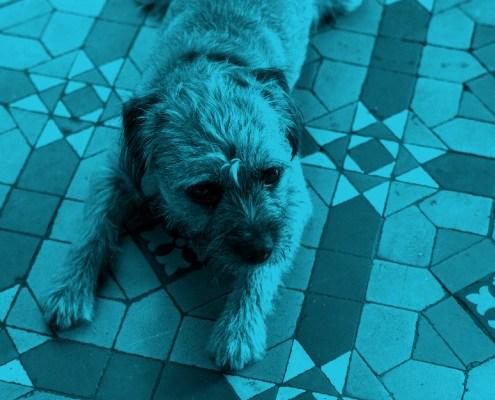 Stan the dog photograph