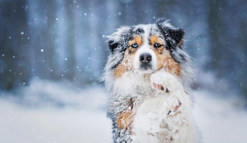 łapy zimą