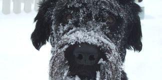 Proteger perro bajo cero