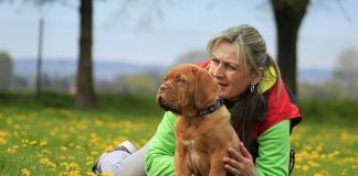 Actividades para hacer con tu mascota en verano