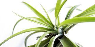 Plantas aire cuidados