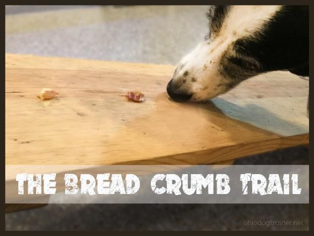 bread crumb trail-Daisy