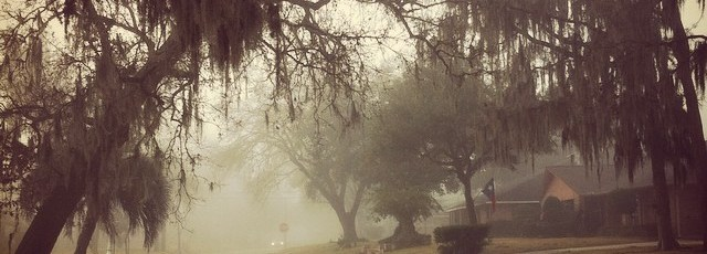 Started-my-day-great-Beautiful-morning-awesome-weather-motivation-trees-nature-morningwalk-fog-glenb