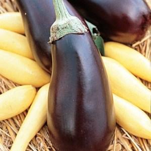 Twilight Hybrid Eggplant