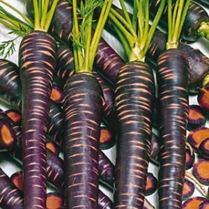 Purple Haze Carrots