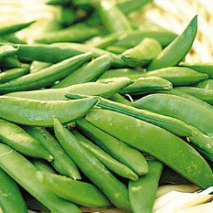 Sugar Ann Snap Pea