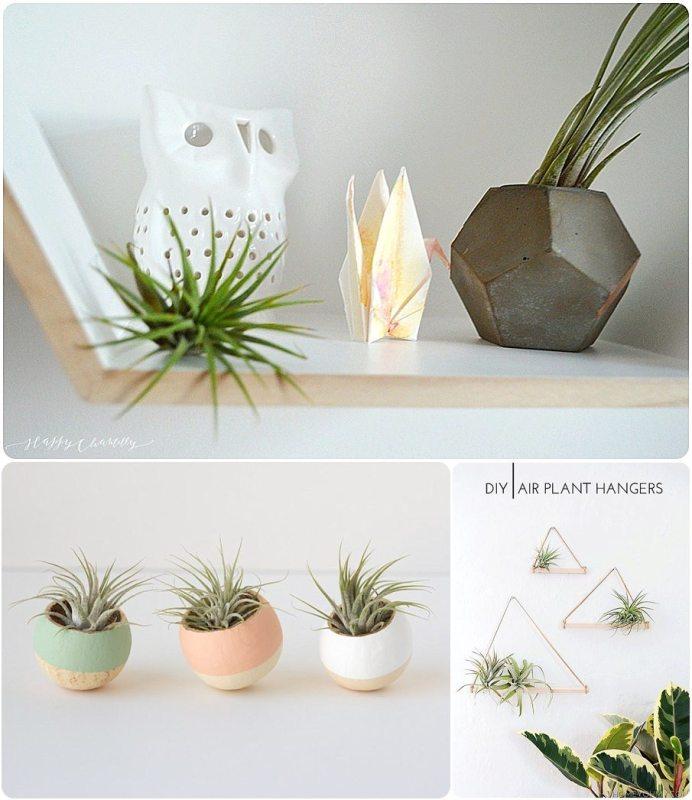 idee-decoration-air-plant-16