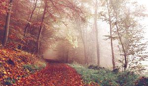 Path In Autumn Woods