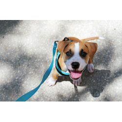 Small Crop Of Lehigh County Humane Society