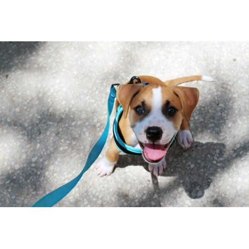 Medium Crop Of Lehigh County Humane Society