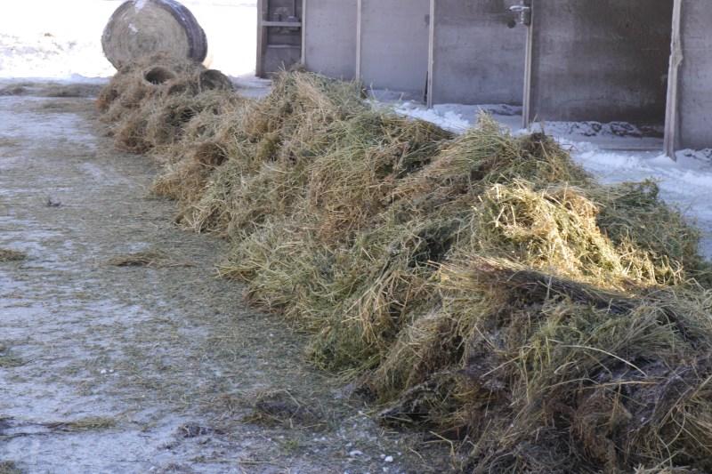 Large Of Hay Vs Straw