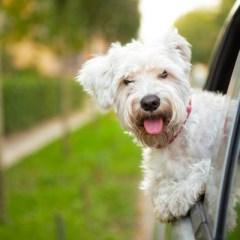 ¿Viajas con mascota? Atención a las leyes y recomendaciones