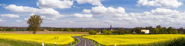 Los problemas al conducir de los alérgicos en primavera