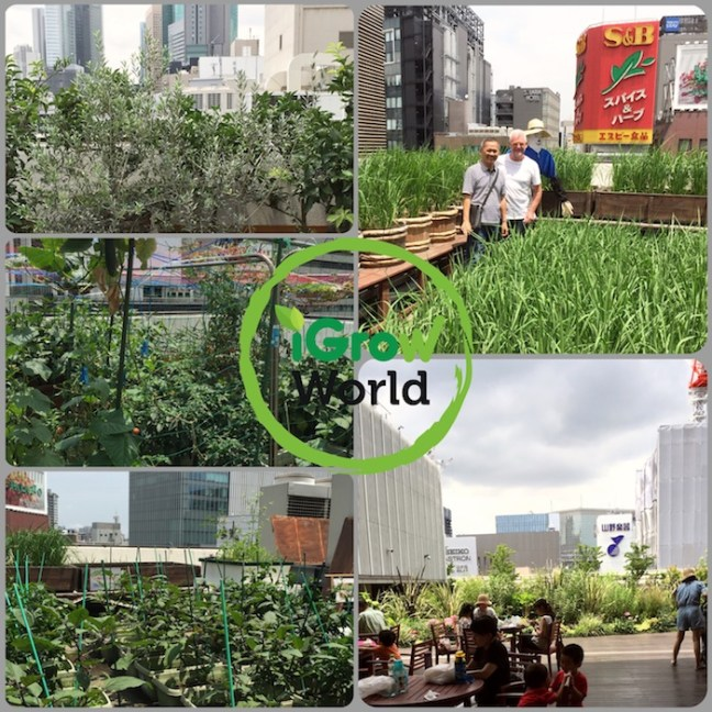 Ultimate Urban Farming : High Rise Roof-Top Farming In Tokyo