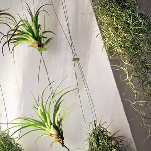 Support Airplant