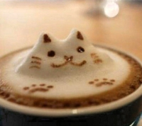 cattachino