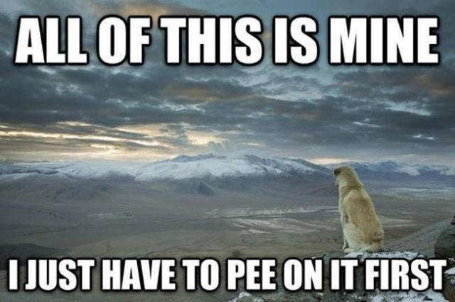 pee-on-it-first-dog