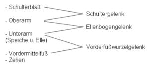gelenk-tabelle3