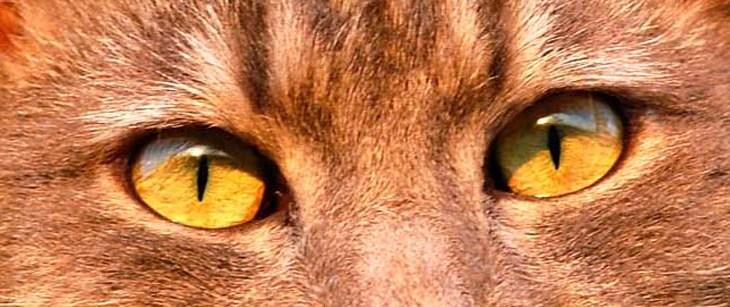 Das Immunsystem der Katze