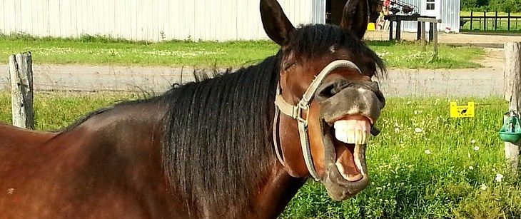 Entwurmen Pferd – natürlich und mit positiven Nebenwirkungen