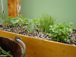 Making great use of space with this hanging seedling/herb planter.