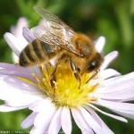Helping our honey bees survive