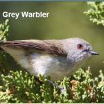 What species of birds are in your garden?