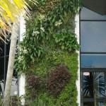 Natural Habitats  Green Wall has grown - new images!