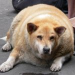 One Fat Dog