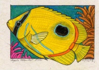 211213-butterflyfish