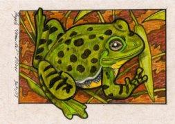 301113-barkingfrog