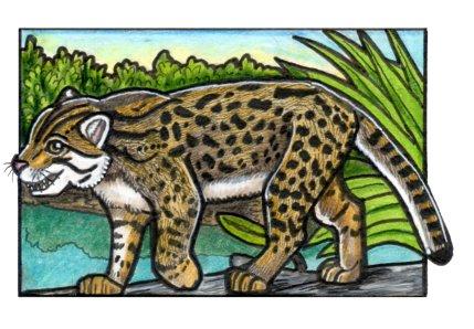 fishingcat