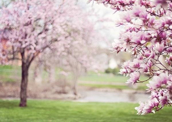 viaggi primavera