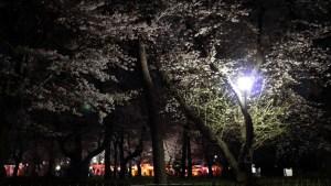 omy_park_sakura_04