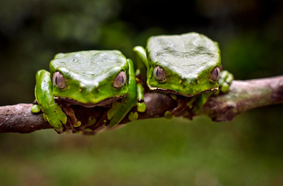 background_frogs