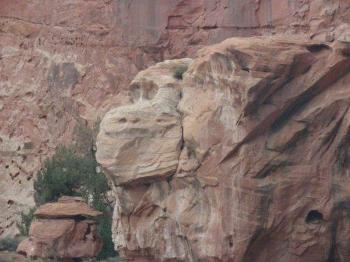 Un rocher en forme de tête de singe ? - Capitol Reef National Park