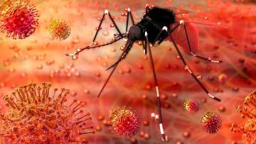Enfermedades emergentes transmitidas por insectos en la Unión Europea