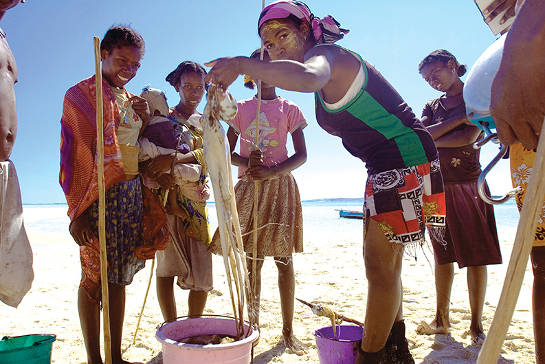 Developing world program octopus in a bucket female fishers