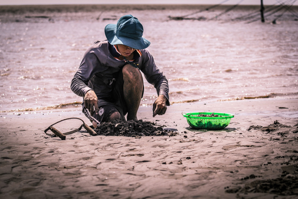 Crouching woman in sun hat gathering clams on sand in Vietnam in Vietnam