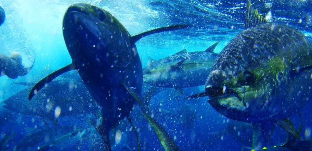 MSC global A sustainable milestone for Mexican tuna - MSC blog