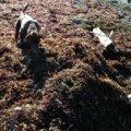 Seaweed and Dog