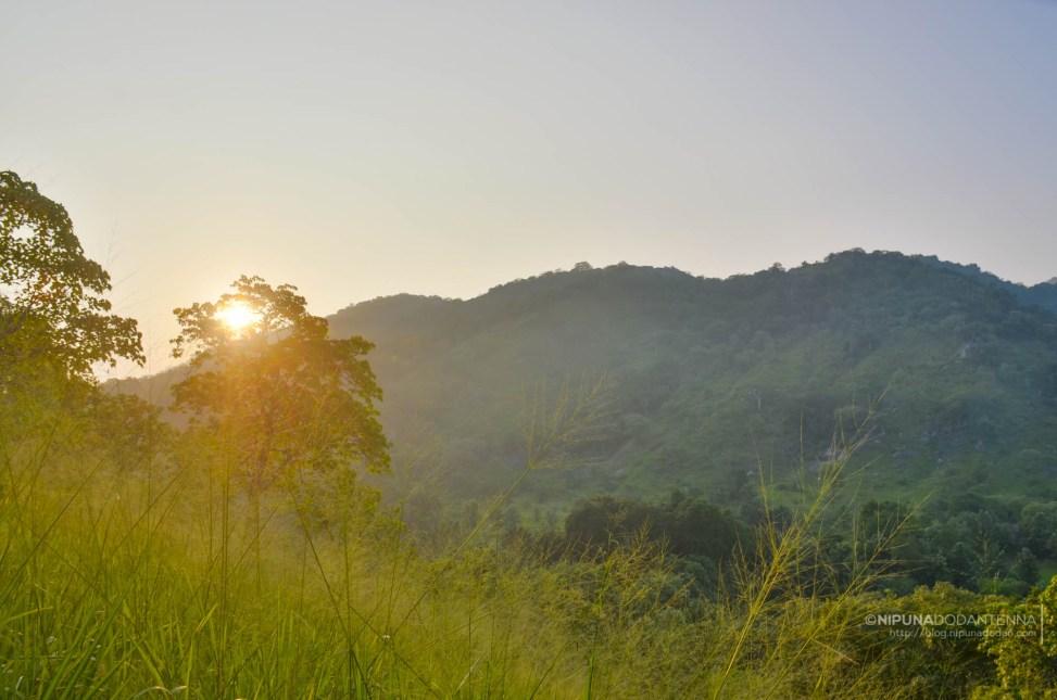 Sunrise thru wilderness