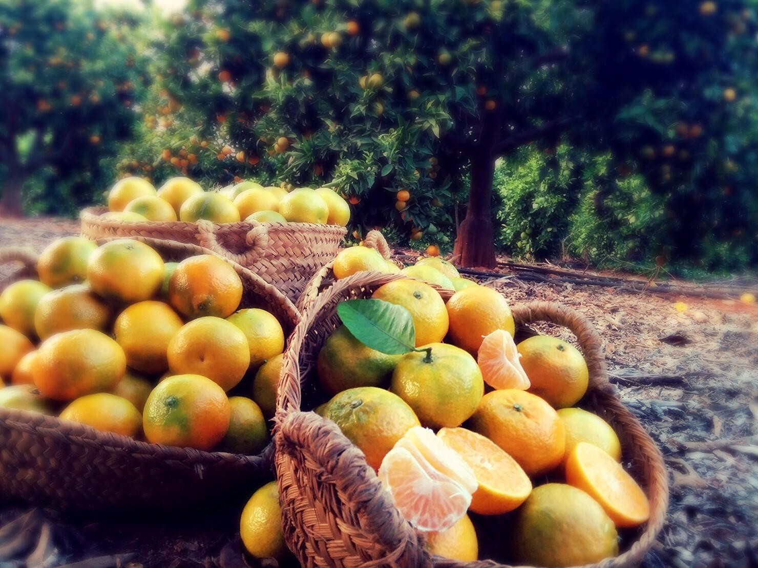 Blog de cítricos de Orange of Spain